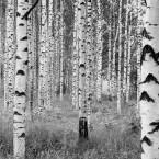 XXL4-023_Woods_m